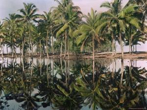Palm Trees Reflected in the Water