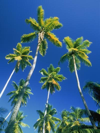 Palm trees, Seychelles, Africa-Frank Krahmer-Photographic Print