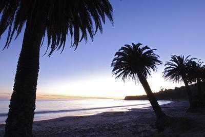 Palm Trees Silhouette at Refugio State Beach in Gaviota, California-Rich Reid-Photographic Print