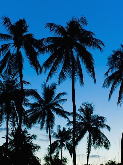 Palm Trees Silhouetted at Night, Sengiggi Beach, Lombok, Indonesia, Southeast Asia, Asia-Matthew Williams-Ellis-Photographic Print