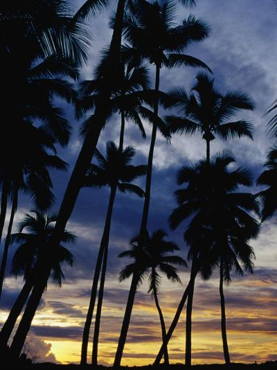 Palm Trees Silhouetted at Sunset, Fiji-Richard I'Anson-Photographic Print