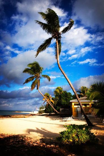 Palm Trees Sway over a Beach in the Cayman Islands in the Caribbean-Chris Bickford-Photographic Print