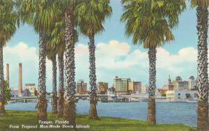 Palm Trees, Tampa, Florida