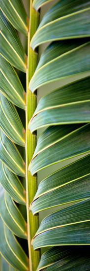 Palma I-Susan Bryant-Photographic Print