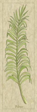 Palmae Leaf-Alicia Ludwig-Art Print