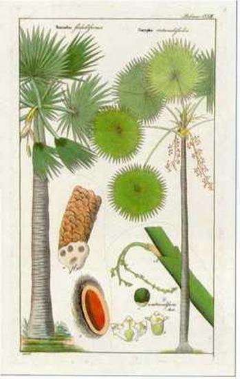 Palmea IV--Art Print