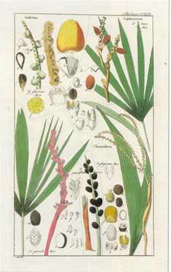 Palmea VII--Art Print