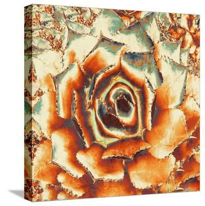 Palmer'S Agave--Stretched Canvas Print