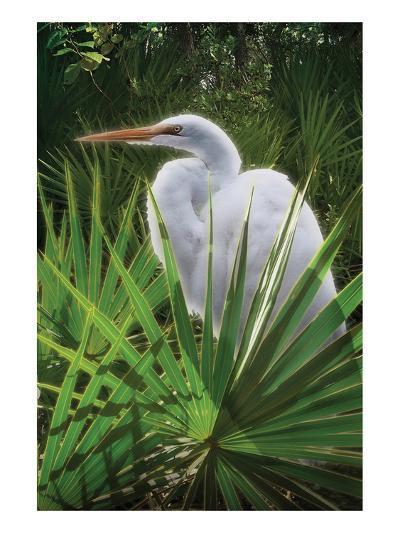 Palmetto Egret-Steve Hunziker-Art Print