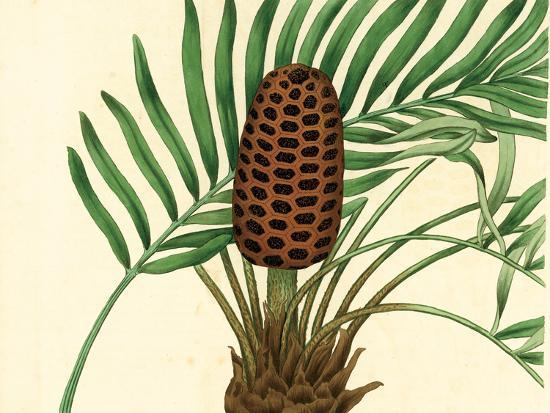 Palmetto III-Zachary Alexander-Art Print