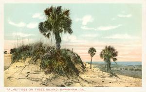 Palmettos, Tybee Island, Savannah, Georgia