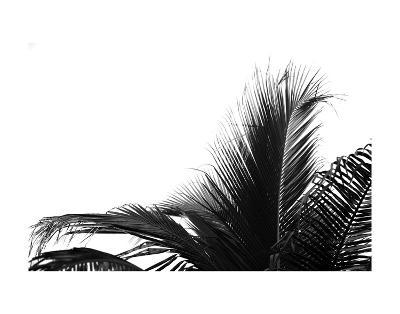 Palms 2-Jamie Kingham-Art Print
