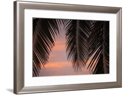 Palms at Sunset-Karyn Millet-Framed Photographic Print