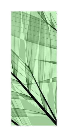 https://imgc.artprintimages.com/img/print/palms-b-green-flash_u-l-f97rzf0.jpg?p=0