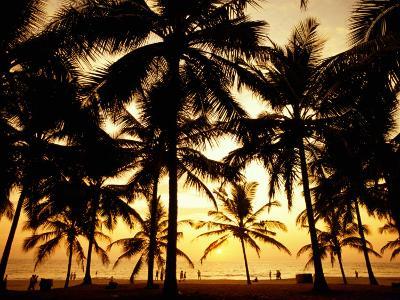 Palms in Evening on Kovalam Beach, Kovalam, Kerala, India-Greg Elms-Photographic Print