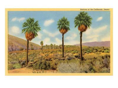 Palms in the California Desert--Art Print