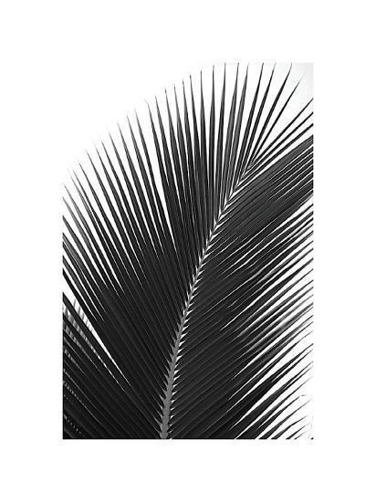 Palms, no. 14-Jamie Kingham-Giclee Print