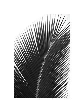 https://imgc.artprintimages.com/img/print/palms-no-14_u-l-f4e03j0.jpg?p=0