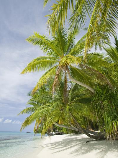 Palms on a Tropical Beach on the Funafuti Atoll in Tuvalu-Ashley Cooper-Photographic Print