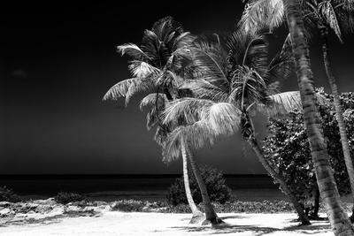 https://imgc.artprintimages.com/img/print/palms-on-a-white-sand-beach-in-key-west-florida_u-l-pz4nq90.jpg?p=0