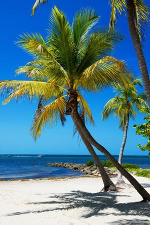 Palms on a White Sand Beach in Key West - Florida-Philippe Hugonnard-Photographic Print
