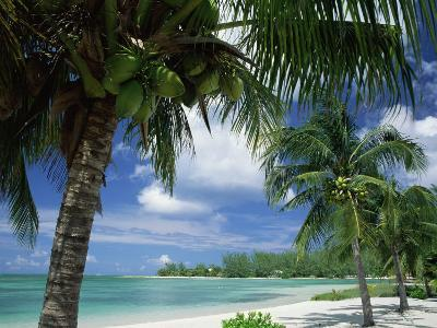 Palms on Shore, Cayman Kai Near Rum Point, Grand Cayman, Cayman Islands, West Indies-Ruth Tomlinson-Photographic Print