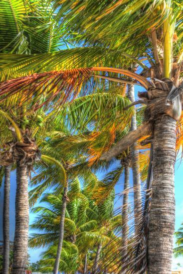 Palms Vertical-Robert Goldwitz-Photographic Print