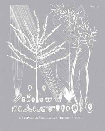 https://imgc.artprintimages.com/img/print/palmyra-ii_u-l-f6cj4c0.jpg?p=0