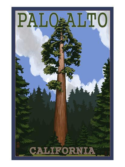 Palo Alto, California - California Redwoods-Lantern Press-Art Print