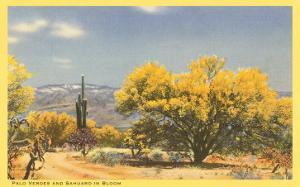 Palo Verde Trees and Saguaro in Desert