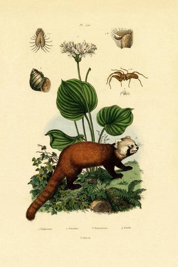 Palp-Footed Spider, 1833-39--Giclee Print