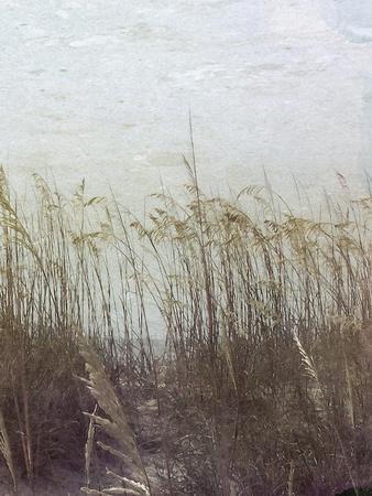Through the Dunes II
