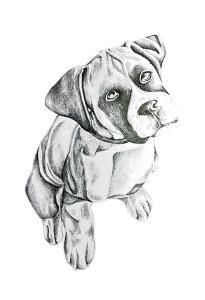 Boxerinpencil by Pam Varacek
