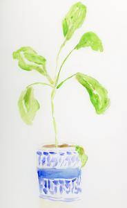Blue and White Botanical II by Pamela J. Wingard
