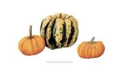 Variegata Squash & Miniature Pumpkins