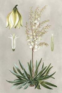 Tropical Varieties I by Pancrace Bessa