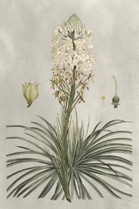 Tropical Varieties III by Pancrace Bessa