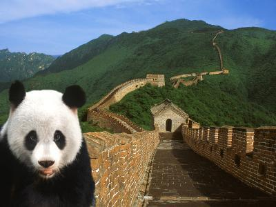 Panda and Great Wall of China-Bill Bachmann-Photographic Print