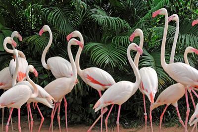 Group of Pink Flamingos by panda3800