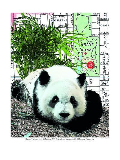 Panda--Art Print