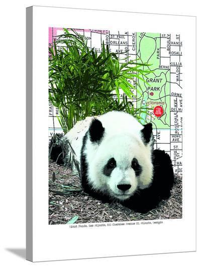 Panda--Stretched Canvas Print