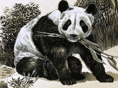 Panda--Giclee Print