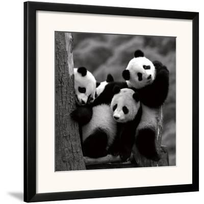 Pandas-Danita Delimont-Framed Art Print