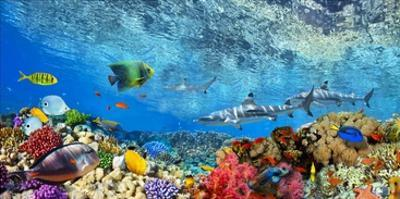 Reef Sharks and fish, Indian Sea by Pangea Images