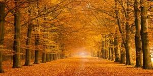 Woods in autumn by Pangea Images