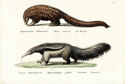 Pangolin Anteater, 1824-Karl Joseph Brodtmann-Giclee Print