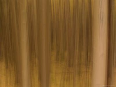 Panned View of a Forest in Autumn Colors-Raul Touzon-Photographic Print