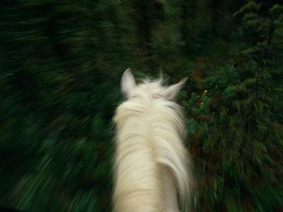 Panned View of a Saddle Horse from Above-Raymond Gehman-Photographic Print