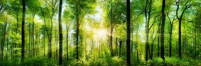 https://imgc.artprintimages.com/img/print/panorama-of-a-scenic-forest-of-fresh-green-deciduous-trees-with-the-sun-casting-its-rays-of-light-t_u-l-q1gx1s40.jpg?artPerspective=n