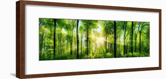 Panorama of a Scenic Forest of Fresh Green Deciduous Trees with the Sun Casting its Rays of Light T--Framed Photographic Print